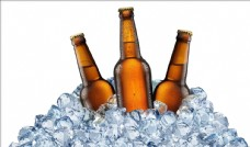 啤酒酿造 啤酒花