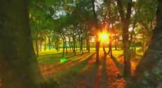 树林里的光线
