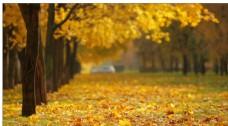 高清实拍唯美秋叶飘落空镜头素材