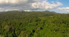 航拍原始森林