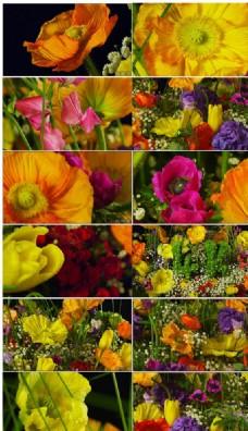 高清实拍美丽彩色花朵特写视频
