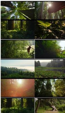 实拍优胜美地国家公园原始森林