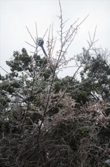 长沙岳麓山雪景