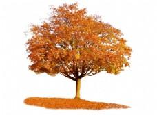 园林景观黄色树木png元素