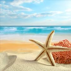 沙滩上的海星