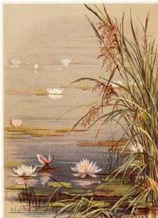 复古手绘花卉装饰画