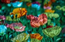 五彩缤纷的花朵
