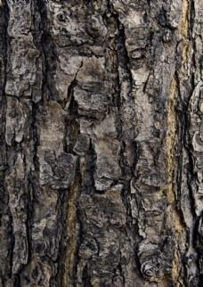 树皮贴图素材