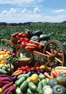丰收的蔬菜